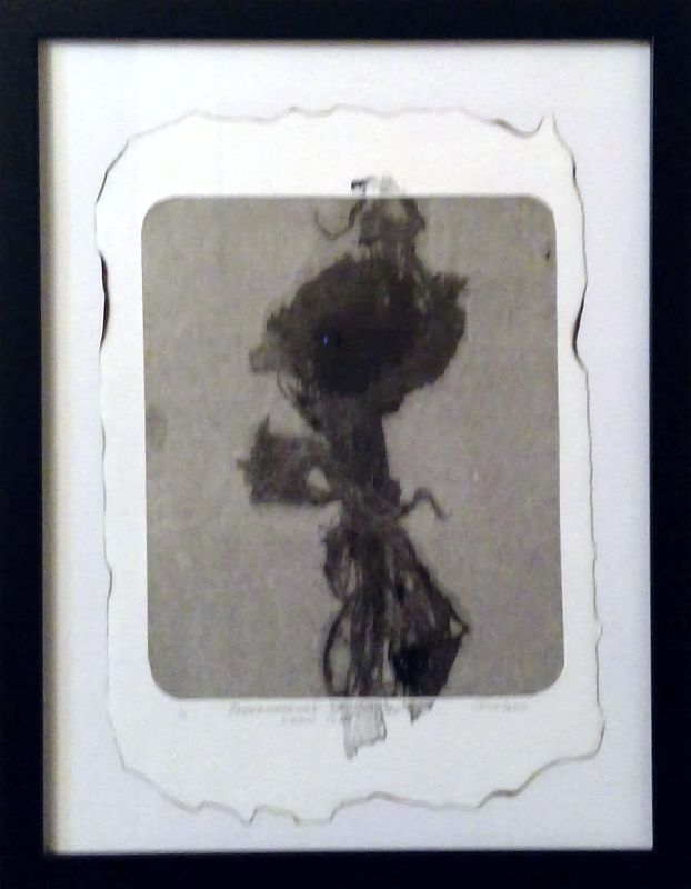 Impermanence of Onion Skin